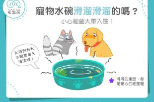 【汪喵餵養知識】汪喵水碗滑溜溜?!當心細菌大軍入侵啦!