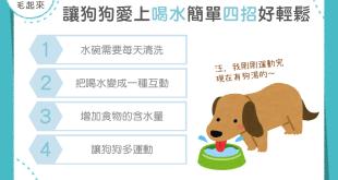 【汪喵餵養知識】狗狗只愛玩水不喝水?!簡單 4 招讓狗狗多喝水!