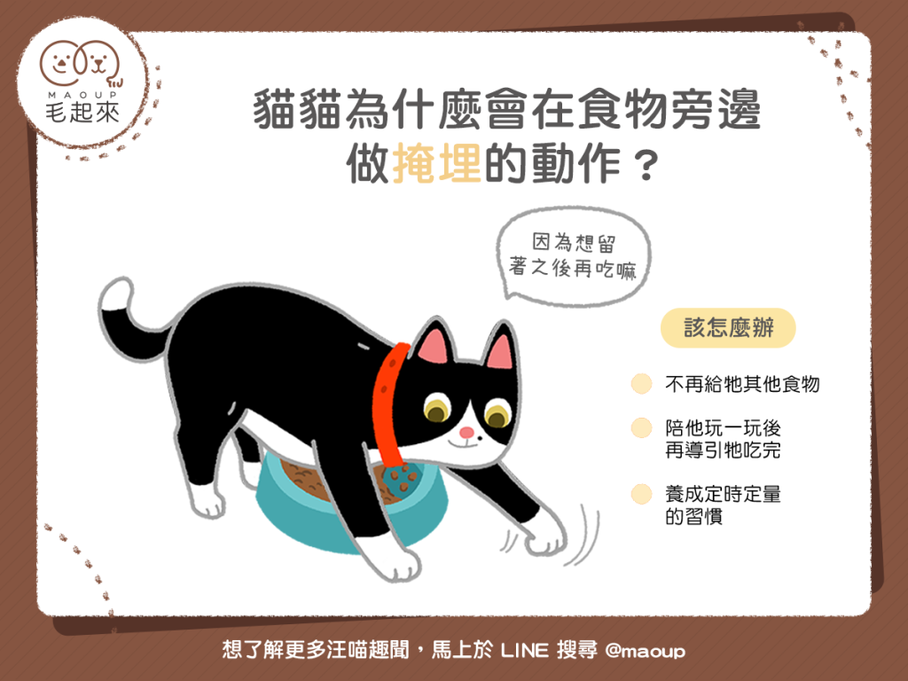 【汪喵餵養知識】貓貓想把食物埋起來?是在嫌棄伙食嗎?!