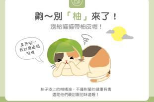 【毛孩食材圖鑑】吼~別「柚」來啦!別給貓貓戴柚皮帽!