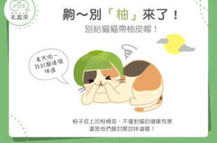 【毛孩食材圖鑑】齁~別「柚」來了!別給貓貓戴柚皮帽!