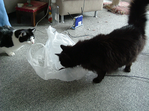 We'd better check that this plastic bag isn't vicious