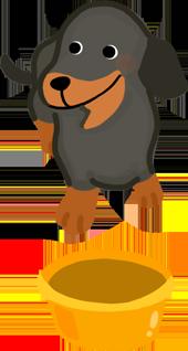 長鼻子臘腸狗阿富汗犬的狗適合深度深的食碗