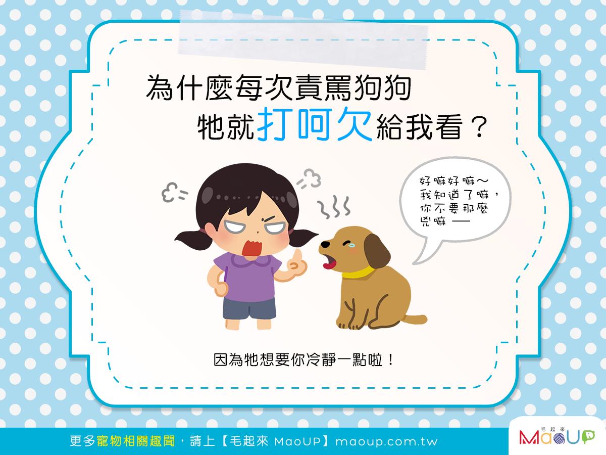 【汪汪行為學】一罵狗狗就打哈欠,難道是在嫌我煩?!