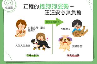 【抱狗姿勢學問大】你抱狗狗的姿勢正確嗎?快來看看吧!