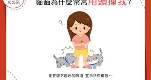 【貓咪行為學】貓貓老是用頭衝撞我……難道是在練鐵頭功嗎?!