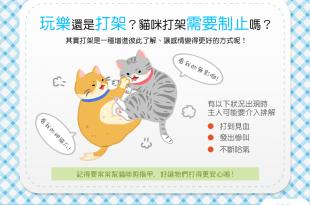 【貓咪行為學】嚇!兩貓互毆揪竟是在玩還是真心開幹?!