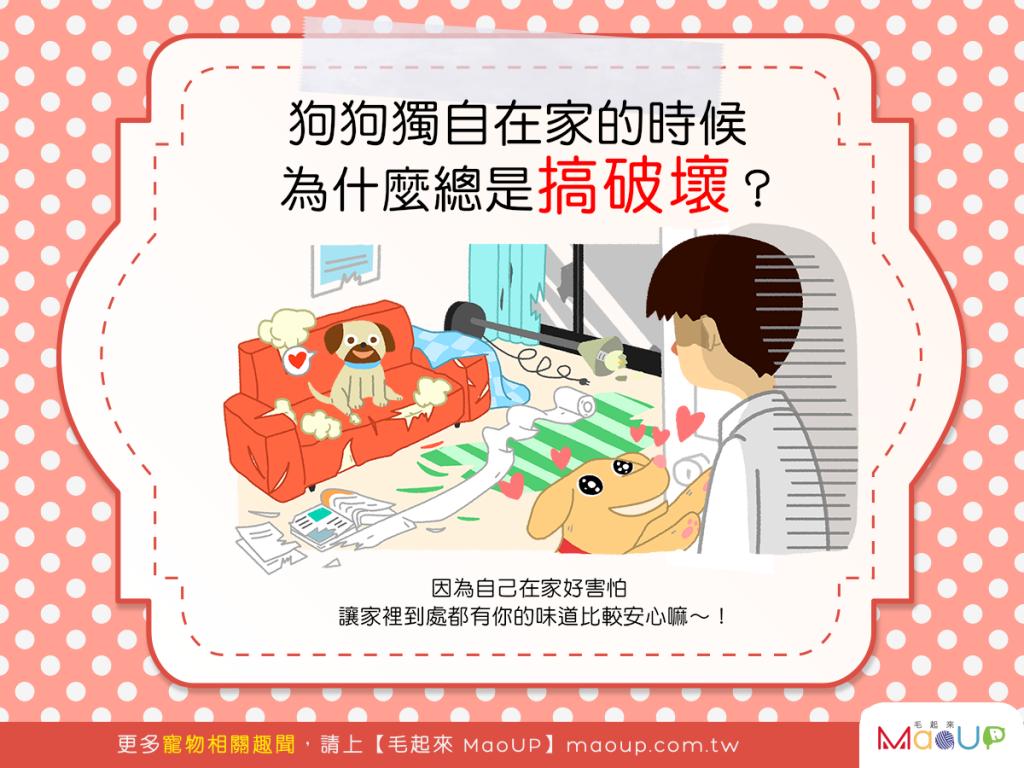 【汪汪行為學】噢不~!為什麼狗狗獨自在家老是搞破壞?!