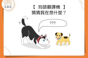【狗語翻譯機】看狗狗的動作~猜狗狗的心思~測你多懂狗狗!
