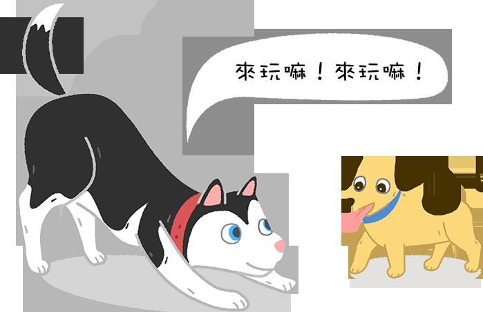 【狗語翻譯機 】看狗狗的動作~猜狗狗的心思~測你多懂狗狗!