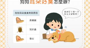【汪汪康健】狗狗耳朵「臭迷摸」?每週至少清一次才健康喔!