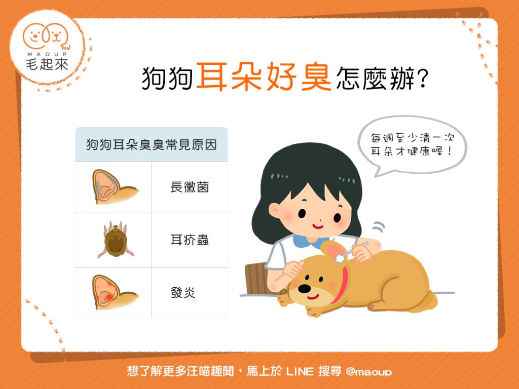 【汪汪康健】狗狗耳朵「臭迷摸」?至少每週清一次才健康喔!