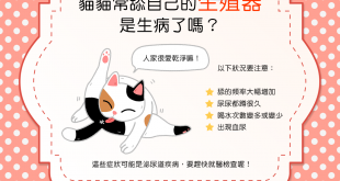 【貓咪行為學】貓貓常舔自己的生殖器,是生病了嗎?