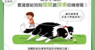 【散步小秘訣】狗狗散步好好奇?多聞多看好舒壓!