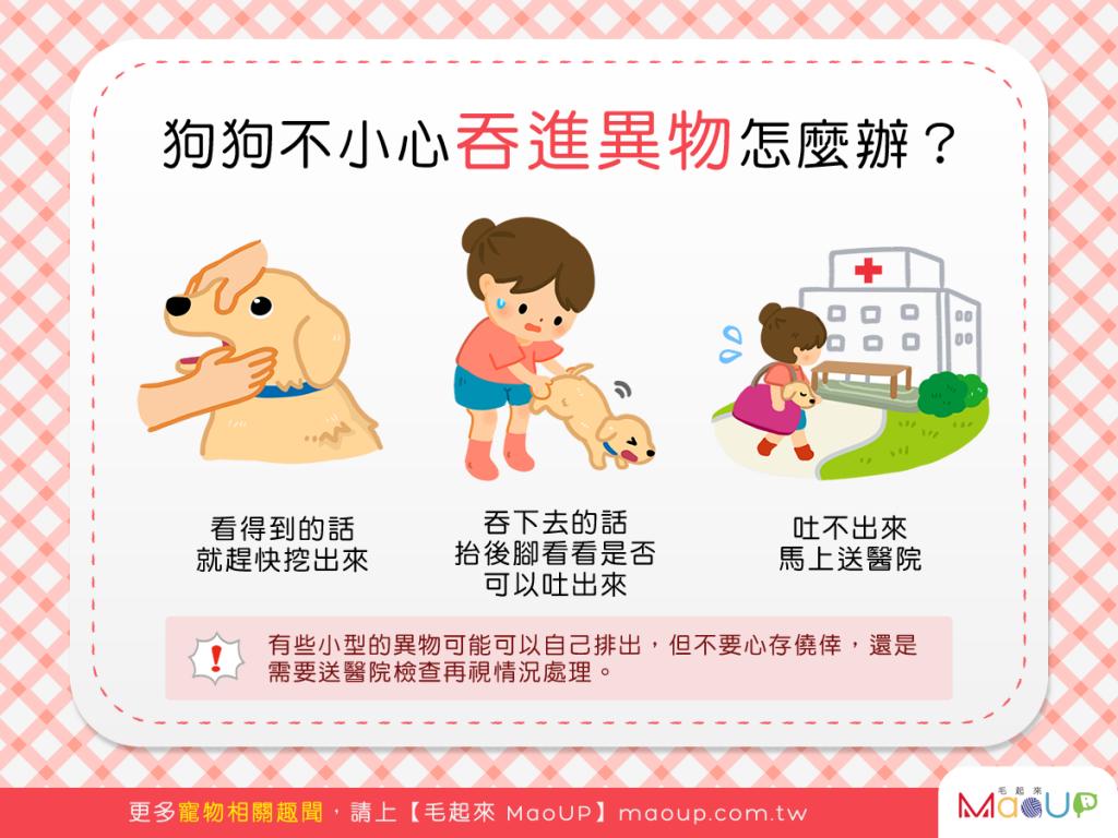 【狗主注意報】天啊!狗狗不小心吞進異物怎麼辦?!