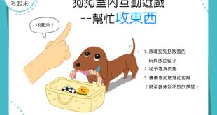 【在家玩耍樂趣多】在家玩什麼?快來教狗狗幫忙收東西吧!