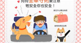 【兜風多注意,行車更安全】狗狗搭車好開心?乘車守則要注意!