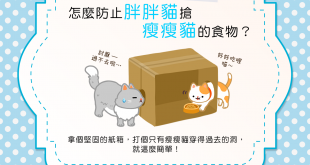 【喵喵的飲食控制術】胖胖貓老搶瘦瘦貓的食物怎麼辦?