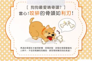 【汪汪迷思】狗狗最愛啃骨頭?當心!咬碎的骨頭如利刃!