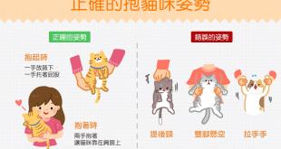 【抱貓姿勢學問大】快給我愛的抱抱~你抱貓咪的姿勢正確嗎?