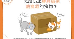 【汪喵餵養知識】胖胖貓老搶瘦瘦貓的食物怎麼辦?