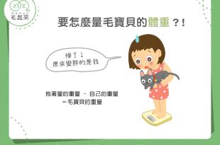 【肥胖汪喵飲食】喵汪老亂動!要怎麼量毛寶貝的體重呢?