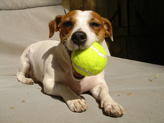 maggie with ball