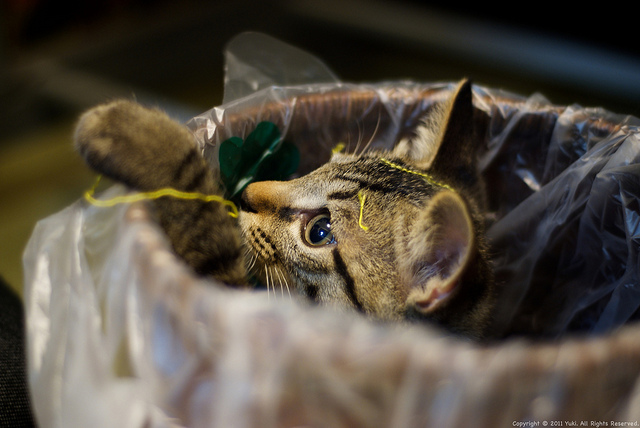 Cat in a garbage box