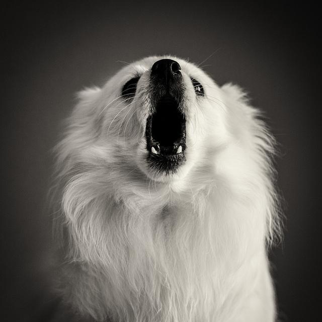 Bark, no bite