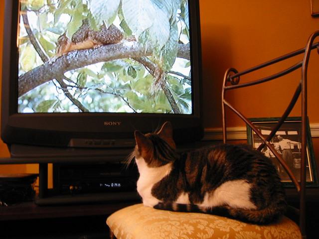 Guga Watches TV