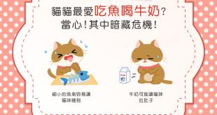 【喵喵迷思】貓咪最愛吃魚、喝牛奶?當心!其中暗藏危機!