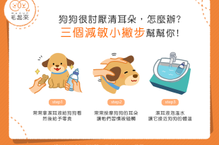 【汪汪康健】狗狗很討厭清耳朵怎麼辦?3個減敏小撇步幫幫你!