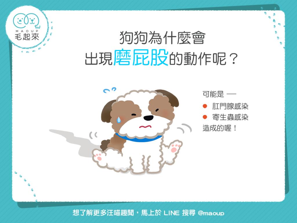 【汪汪康健】狗狗磨屁股只是屁股癢?!可能是受到感染了!