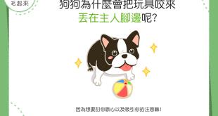 【汪汪真心話】狗狗把玩具咬來丟在主人腳邊,只是想玩嗎?