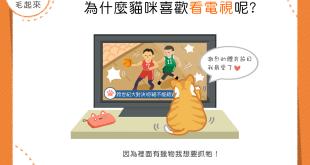 【貓咪行為學】電視魅力無法檔?貓貓都成了「電視兒童」?!