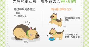 【汪汪康健】可怕的「胃扭轉」恐致命!大狗飼主要注意!