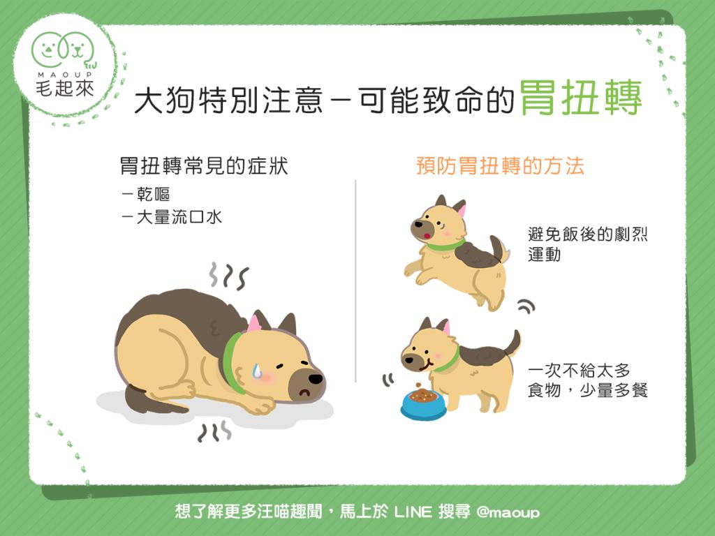 【汪汪康健】可怕的「胃扭轉」恐致死!大狗飼主要注意!