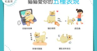 【喵喵愛語知多少】誰說貓貓不愛你?貓貓愛你的5種表現!