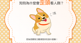 【汪汪真心話】賣萌有理!你知道狗狗為什麼歪頭看人嗎?
