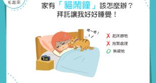 【喵喵訓練術】家有「貓鬧鐘」該怎麼辦?拜託讓我好好睡覺!