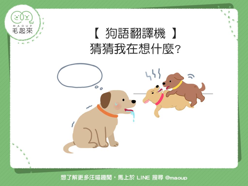 【狗語翻譯機】狗狗流口水、尾巴下垂?猜猜狗狗想什麼!