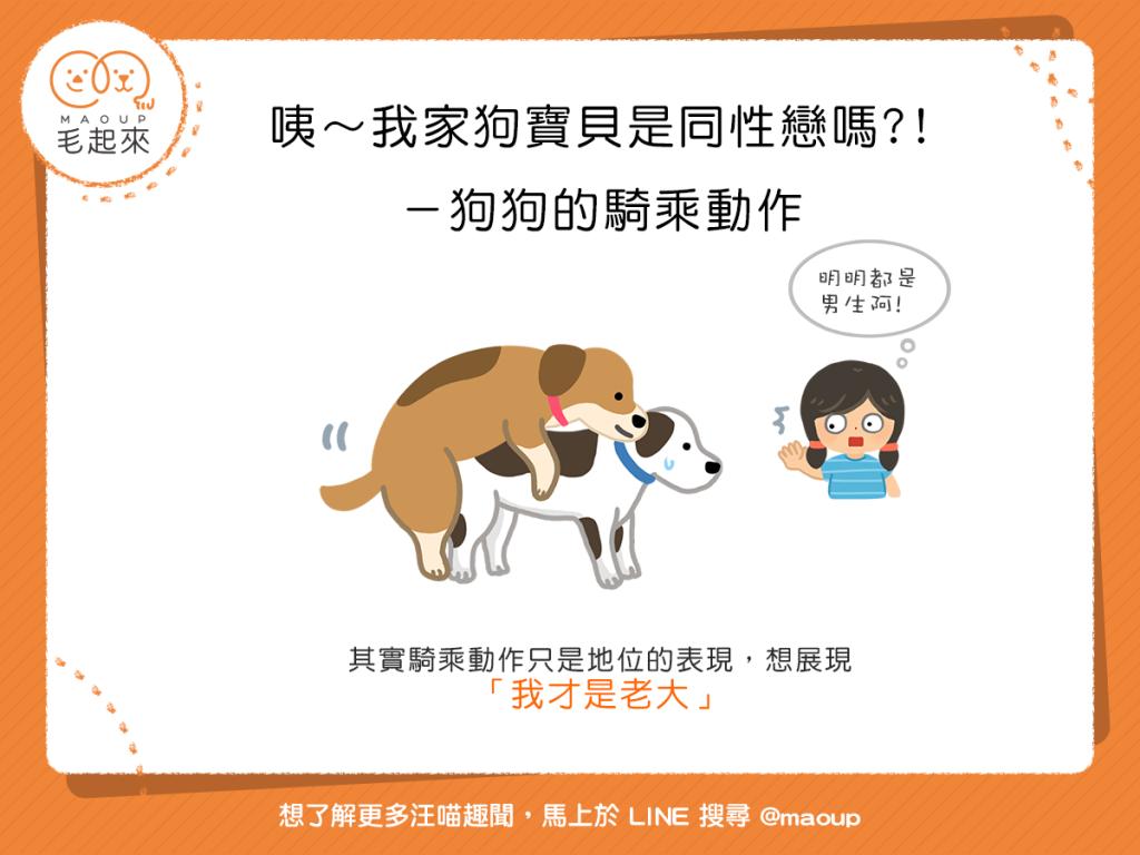 【汪汪真心話】咦~騎乘動作?!難道我家狗寶貝是同性戀嗎?!