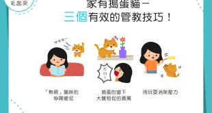 【家有搗蛋貓】貓咪超皮怎麼辦?!3個有效的管教技巧幫幫你!