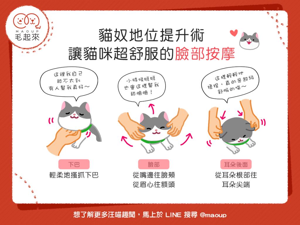 【貓奴地位提升術】摸貓又能拉好感?讓貓咪超舒服的臉部按摩!