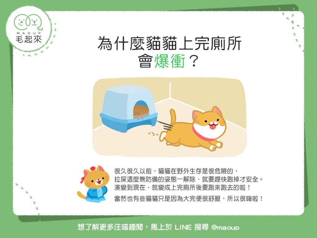 【喵喵行為學】貓貓上完廁所老是爆衝?!是在嗨什麼?!