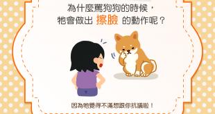 【汪汪真心話】罵狗狗的時候,狗狗擦臉是為什麼?!