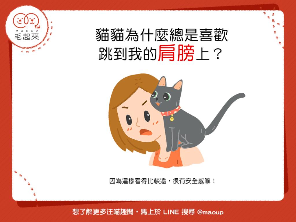 【喵喵真心話】貓貓總是喜歡跳到我的肩膀上!有什麼意思嗎?!