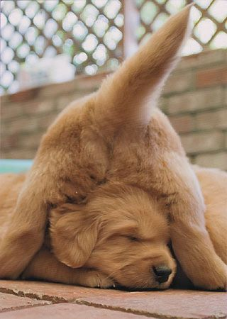 The Definitive Ranking of Adorable Puppy Butts