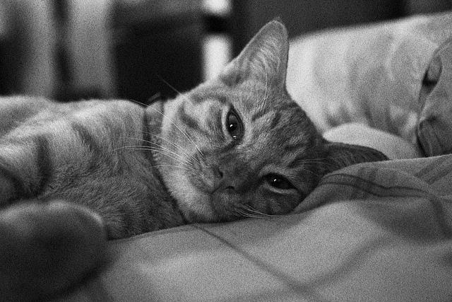"""LOOK, IM TRYIN 2 SLEEP. WUTS UR SCUSE?"""