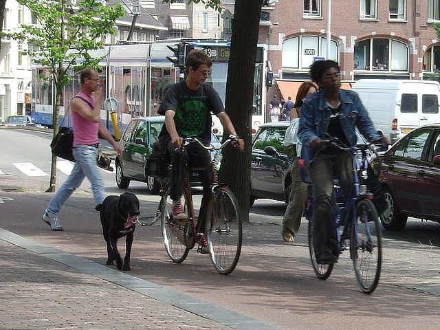 dog walking/bike riding